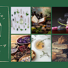 メルマガ【植物の魔力を学ぶ!アロマとハーブの教科書】配信開始のお知らせの記事より