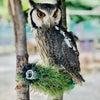 幸運を呼ぶ鳥フクロウは、アテナの聖鳥、知恵のシンボルの画像