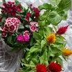 「梅雨明けに向けて花を植え替える。」S8169