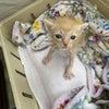 乳飲み子猫のためのご寄付のお願いの画像