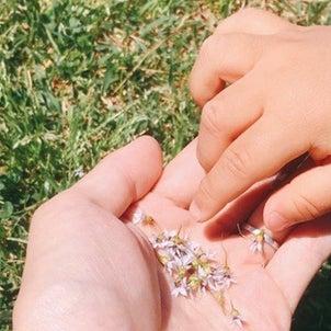 石けんで落とせる日焼け止め、お子さんも安心しで使えます❣️の画像