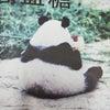 やっぱり、パンダが好き の画像