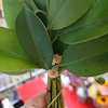 神棚のお榊(さかき)に花が咲いていた!『吉兆』の画像