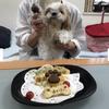 シーズー『チェリーちゃん』のBirthdayケーキの画像