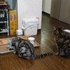 ★おるすばん猫4コママンガ。の画像