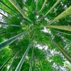 破竹の勢いと因果の画像