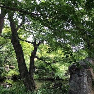 渋川八幡宮を紹介!YouTube動画のお知らせの画像