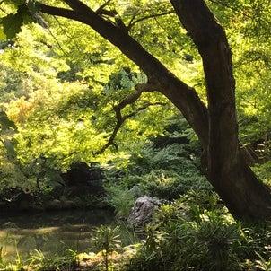 緑豊かな渋川八幡宮✨の画像