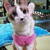 ちゅらにゃん保護猫治療室からの画像