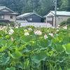 漢方生薬説明  奄美大島と 蓮の花を思っていたら…    よんでくれた手の画像