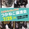 子猫もいるよ良縁成就人と猫を繋ぐつかねこ譲渡会7/25(日)13:00~17:00(...の画像