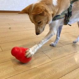画像 水曜の犬の幼稚園!( ˘ω˘ ) の記事より 1つ目