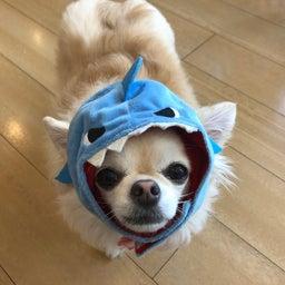 画像 水曜の犬の幼稚園!( ˘ω˘ ) の記事より 7つ目