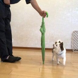 画像 水曜の犬の幼稚園!( ˘ω˘ ) の記事より 10つ目