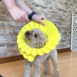 画像 水曜の犬の幼稚園!( ˘ω˘ ) の記事より 8つ目