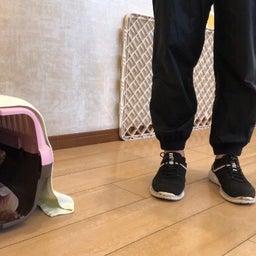 画像 水曜の犬の幼稚園!( ˘ω˘ ) の記事より 9つ目