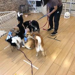 画像 水曜の犬の幼稚園!( ˘ω˘ ) の記事より 14つ目