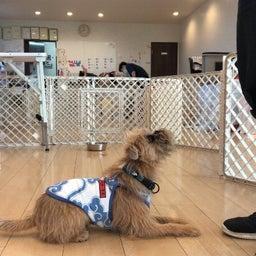 画像 水曜の犬の幼稚園!( ˘ω˘ ) の記事より 3つ目