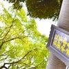 【熊野神社さんのホムペとInstagramでご案内】の画像