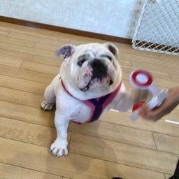 画像 木曜の犬の幼稚園!♪( ´▽`) の記事より 8つ目