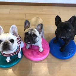 画像 木曜の犬の幼稚園!♪( ´▽`) の記事より 11つ目