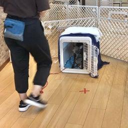 画像 木曜の犬の幼稚園!♪( ´▽`) の記事より 1つ目
