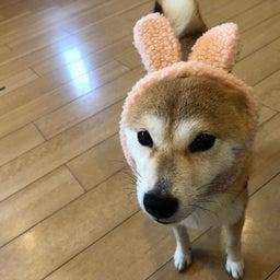 画像 木曜の犬の幼稚園!♪( ´▽`) の記事より 9つ目