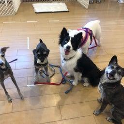 画像 木曜の犬の幼稚園!♪( ´▽`) の記事より 12つ目
