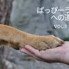 『ぱっぴーライフへの道Vol.3』子どもと犬 アニマル通信の画像