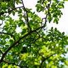 「木」の本質 ~陰占から読む「木火土金水」の画像
