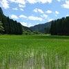 稲が喜んでる~☀️の画像