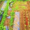 7月の菜園!土用の土いじり!の画像
