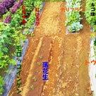 7月の菜園!土用の土いじり!の記事より