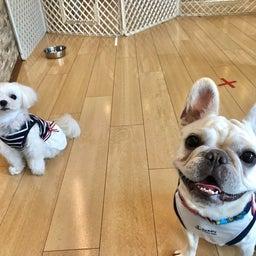 画像 金曜の犬の幼稚園!(*^▽^*) の記事より 5つ目