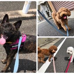 画像 金曜の犬の幼稚園!(*^▽^*) の記事より 2つ目