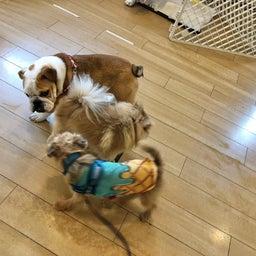 画像 金曜の犬の幼稚園!(*^▽^*) の記事より 3つ目