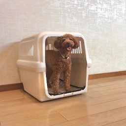 画像 金曜の犬の幼稚園!(*^▽^*) の記事より 9つ目