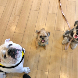 画像 金曜の犬の幼稚園!(*^▽^*) の記事より 12つ目