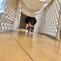 画像 金曜の犬の幼稚園!(*^▽^*) の記事より 4つ目
