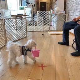 画像 金曜の犬の幼稚園!(*^▽^*) の記事より 11つ目