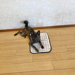 画像 金曜の犬の幼稚園!(*^▽^*) の記事より 6つ目
