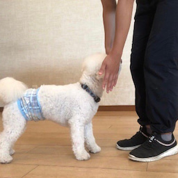 画像 金曜の犬の幼稚園!(*^▽^*) の記事より 8つ目