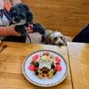 ワアイヤーダックス『福くん』&Mix犬「姫ちゃん」のBirthdayケーキの画像
