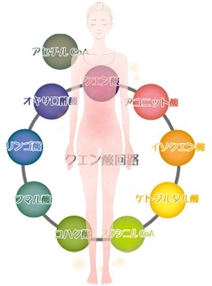 代謝の仕組み・TCAサイクル・ATP