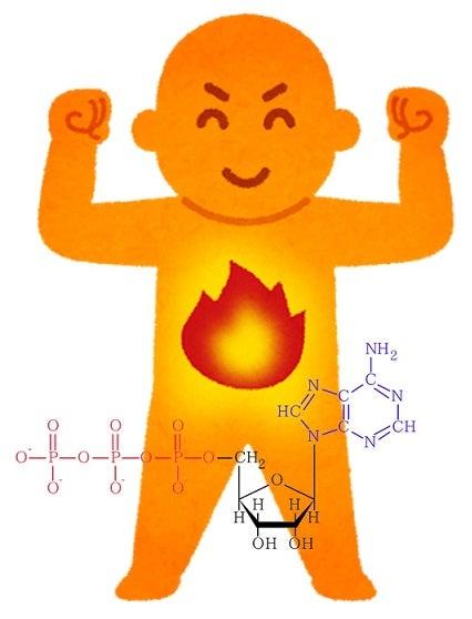 ATP・細胞の最適温度