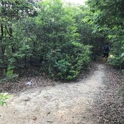 画像 7月25日(日)東山一万歩コースのお知らせ の記事より 1つ目