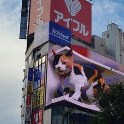 画像 インパルスと巨大ネコ の記事より 3つ目