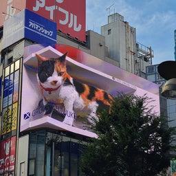 画像 インパルスと巨大ネコ の記事より 4つ目
