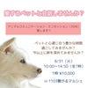 8/31(火)アニマルコミュニケーション・ミニセッション in 1103繋がるマルシェの画像