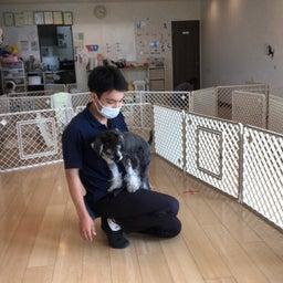 画像 犬の幼稚園〜月曜クラス( ^∀^)〜 の記事より 12つ目